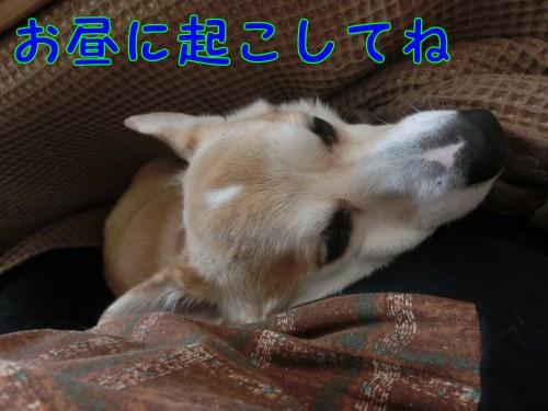 20160131_5.jpg