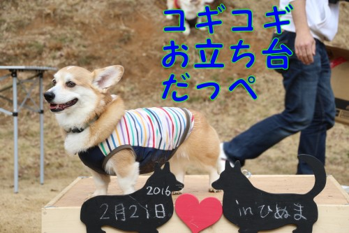 20160222_01.jpg