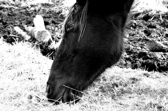 杵島岳とお馬さん
