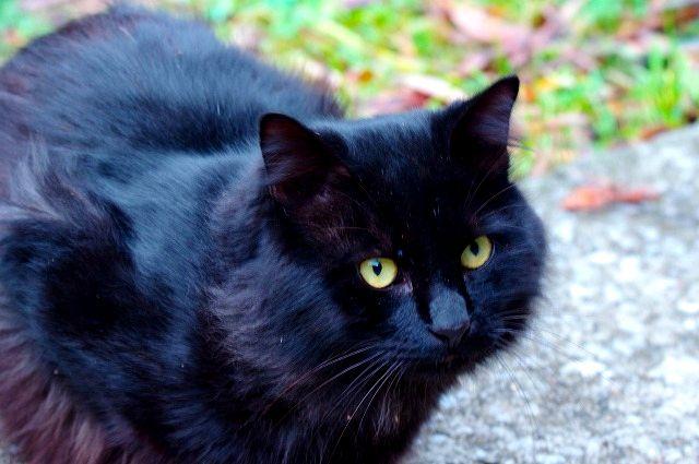 猫の楽園 新春 1(悪戯子猫の動画付き)