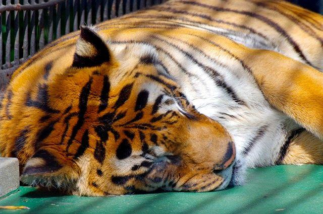 フェニックス自然動物園 3