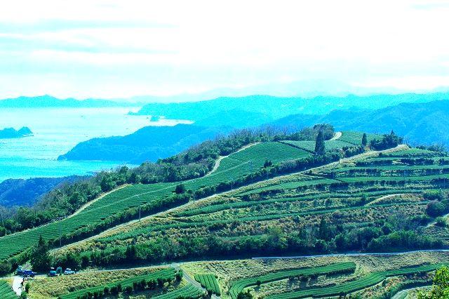 絶景 地下の茶畑(じげ)