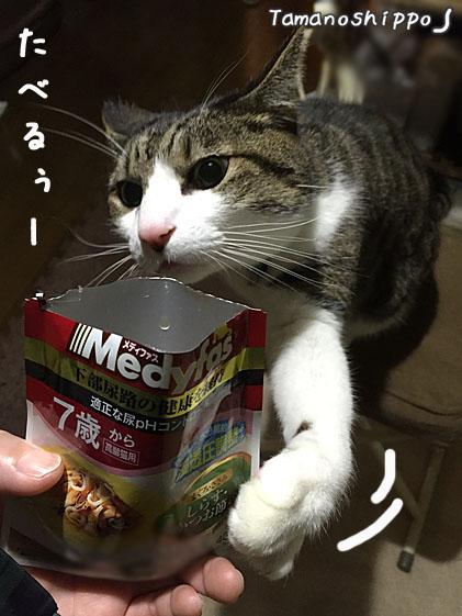 スープパウチを取ろうとする猫(ちび)