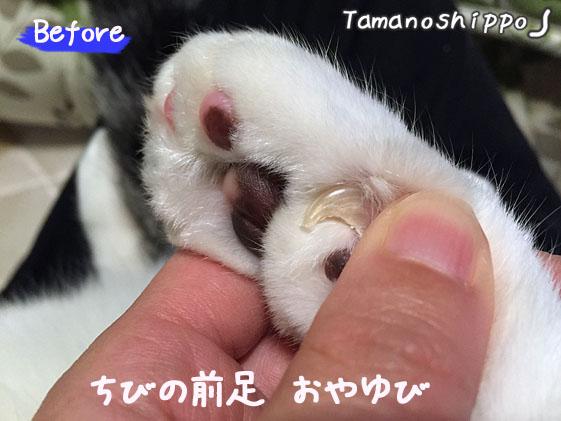 猫の爪先(ちび)前足の親指(切る前)