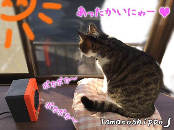 ヒーターと日向ぼっこ中の猫(ちび)日光浴