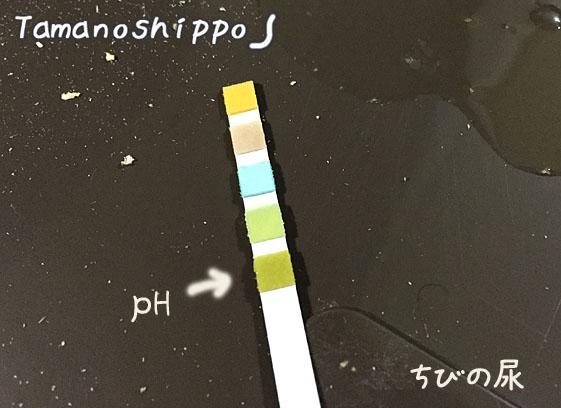 尿試験紙(ちび)ph7.0
