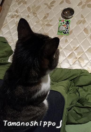 魔法のふりかけを眺める猫(ちび)