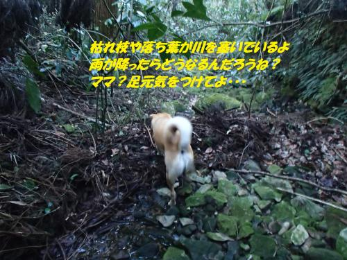 P2120343_convert_20160213132051.jpg