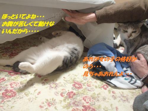 P2210435_convert_20160223081551.jpg