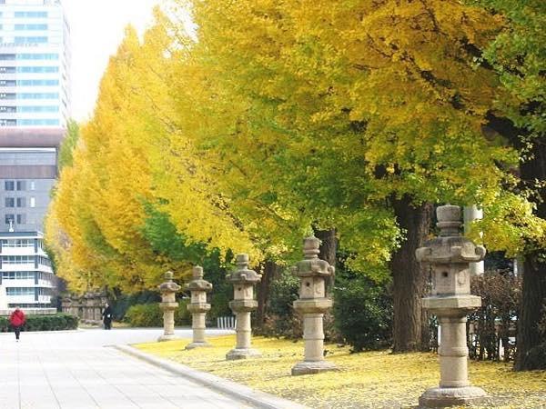 20151116 靖国神社の銀杏