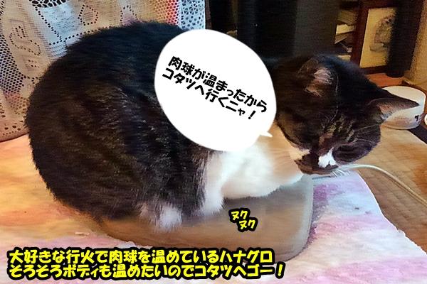 猫はコタツ