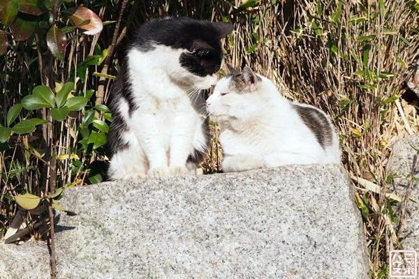 野良猫 キス