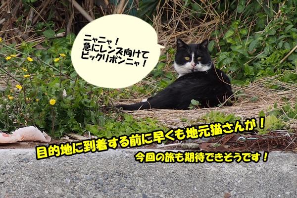 三崎口 漁港 猫