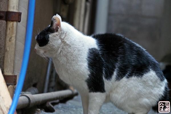 ニャポ旅15 月島 猫
