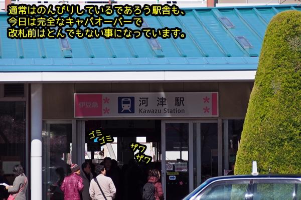 ニャポ旅17 河津編