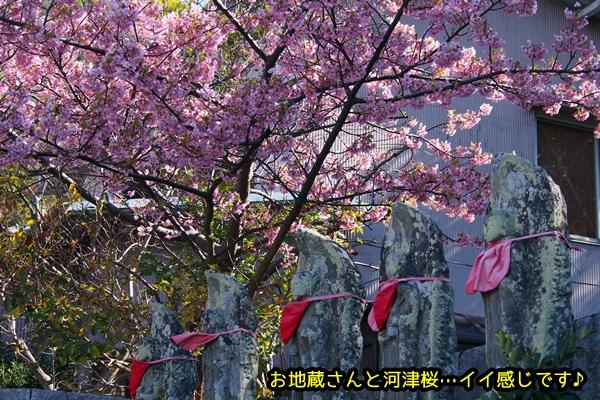 ニャポ旅17 河津桜
