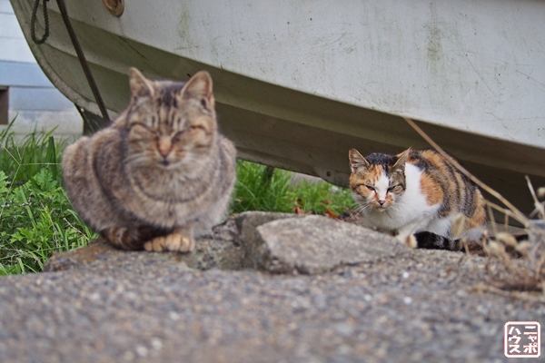 ニャポ旅14 三崎口の猫