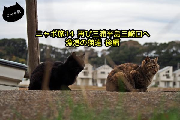 ニャポ旅14 再び三崎口へ後編 猫
