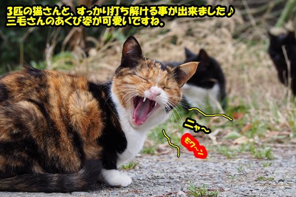 ニャポ旅14 再び三崎口へ前編 猫