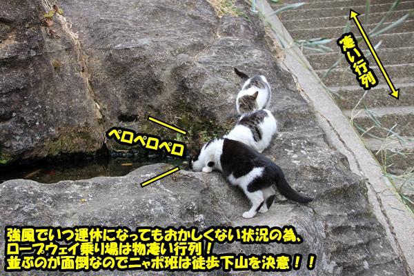 ニャポ旅16 千葉 鋸山 猫