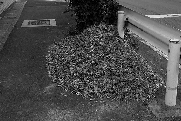 道ばたの落ち葉