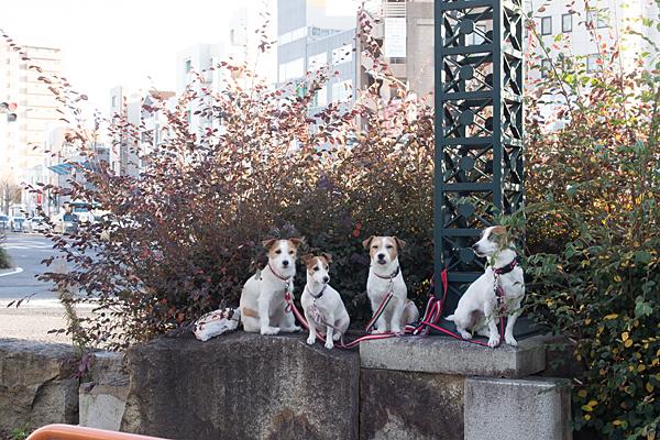 待っている犬4匹