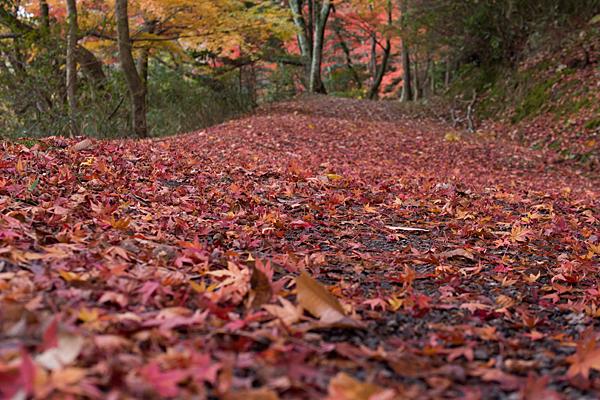 森林公園落ち葉絨毯