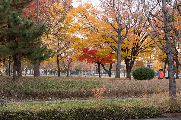 千種公園の紅葉