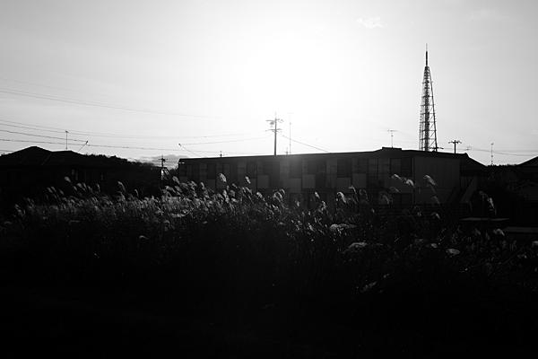ススキと瀬戸デジタルタワー