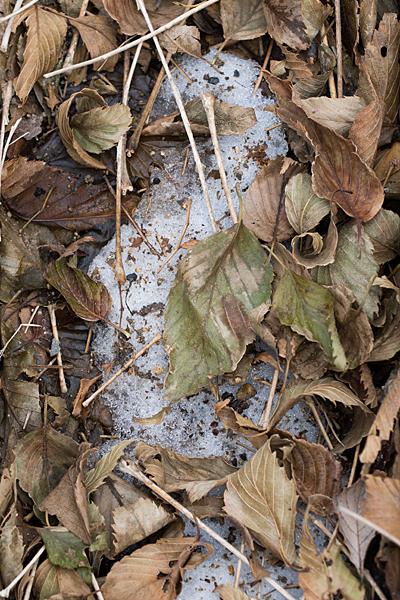 枯れ葉と残雪