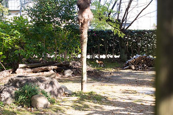 庭の三毛猫