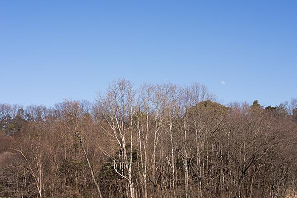 冬の立木と昼の月