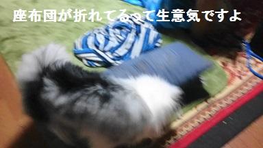 MOV_2411(1).jpg