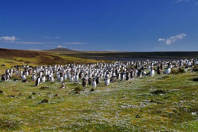ペンギンと羊の住む島々の物語 ~ 自分でやらなくて、誰がやるの?