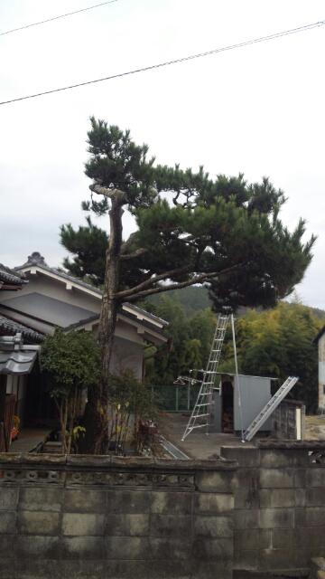 pine_b2.jpg