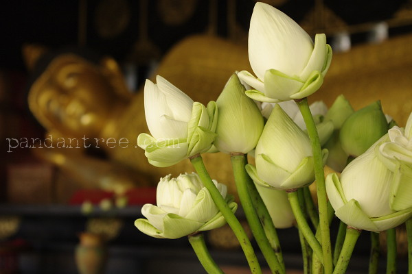 チェンマイのお寺の花