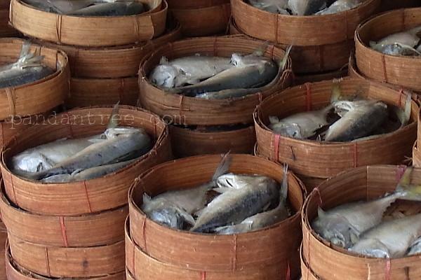 プラトゥー(魚)