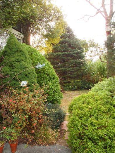 my-garden 042 (2)
