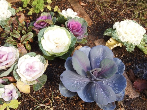 my-garden 058