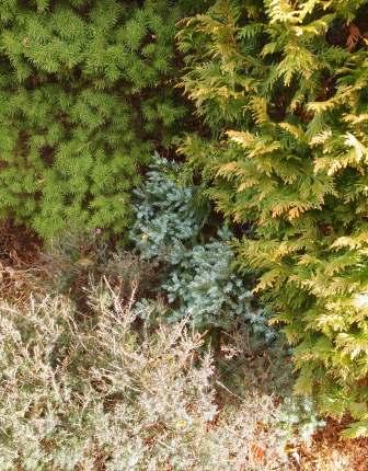 my-garden 028 (5)