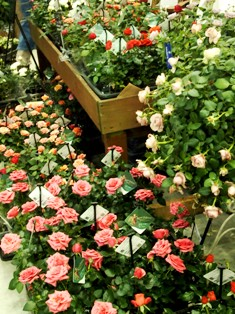 my-garden 206