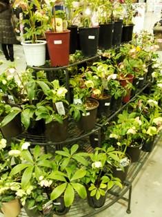 my-garden 140