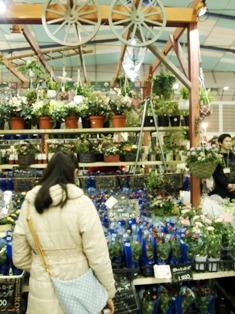 my-garden 207