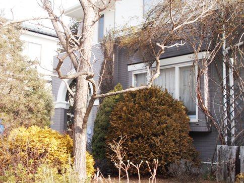 my-garden 040 (3)