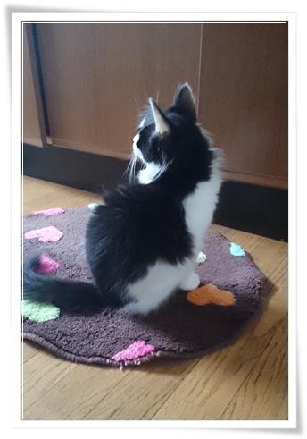 うちのブログの看板ニャンコ写真。その8♪猫は大変なコトもたまにあるケド確実に癒されます(`・ω・´)