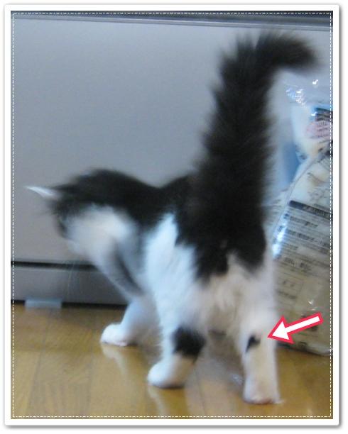 うちのブログの看板ニャンコ写真。その9♪後ろ足の模様が、 時々ハートに見える時があります。