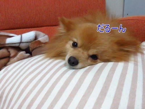 s-IMG_3295.jpg