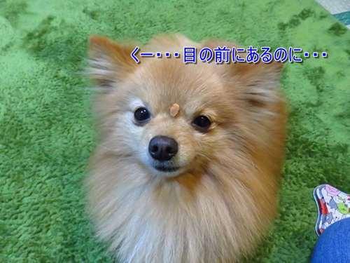 s-s-IMG_6645.jpg