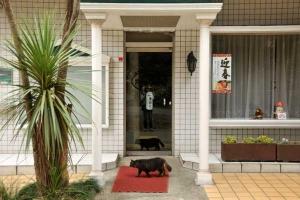 Cat - Good Morning! It\'s Junbichu (Closed)