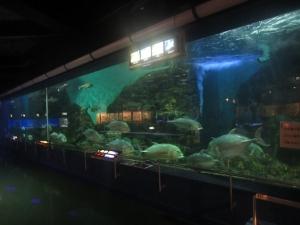 碧南水族館修正2